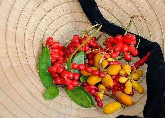 Những loại trái cây Việt Nam tên lạ hoắc, ai biết chắc đã có tuổi thơ quê nhà-2