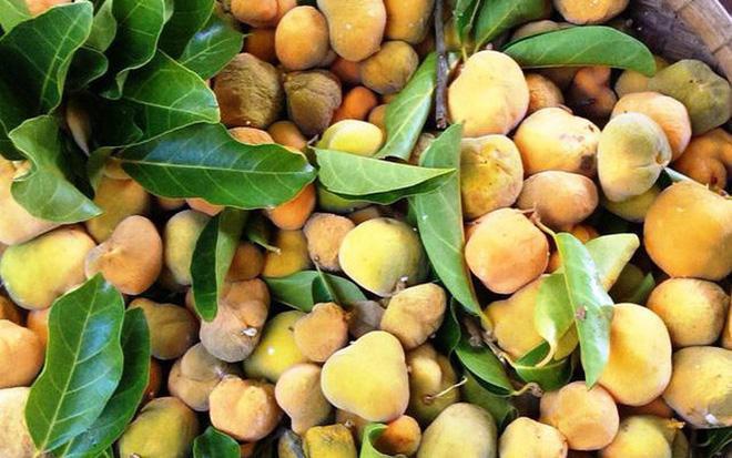 Những loại trái cây Việt Nam tên lạ hoắc, ai biết chắc đã có tuổi thơ quê nhà-11