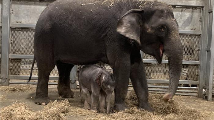 Dù bị nhốt nhưng voi trong sở thú vẫn chăm tập thể dục hơn cả con người - Ảnh 3.