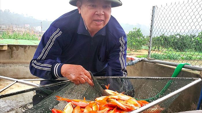 Tết ông Công, ông Táo: Người nuôi cá chép nhận đặt cọc hàng trăm triệu đồng - 1