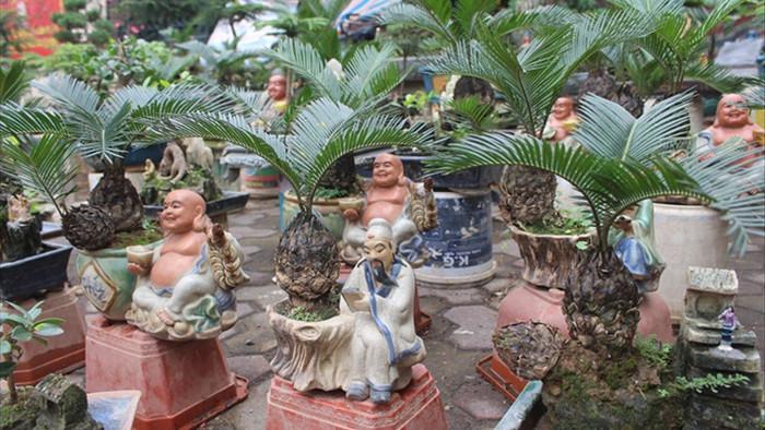 Chán mai, ngán đào, nhiều thượng đế săn lùng mua vạn tuế bonsai chơi Tết - 2