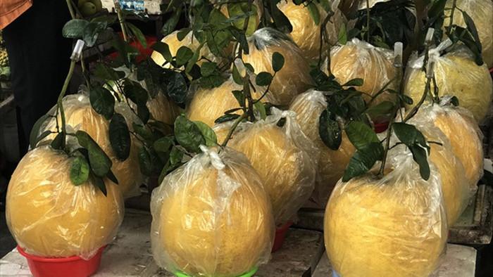 Bưởi khổng lồ 10 kg/quả, dân Hà Nội lùng sục mua về trưng Tết - 1