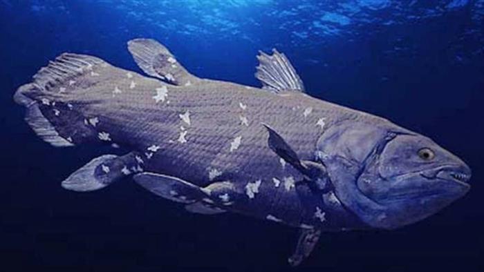 Hé lộ bí mật của cá hóa thạch sống châu Phi - 1