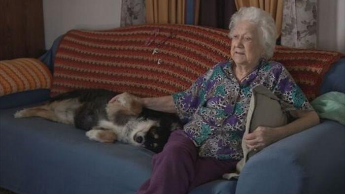 Chó thừa kế từ chủ 5 triệu đô la Mỹ chỉ sau 1 đêm - 2
