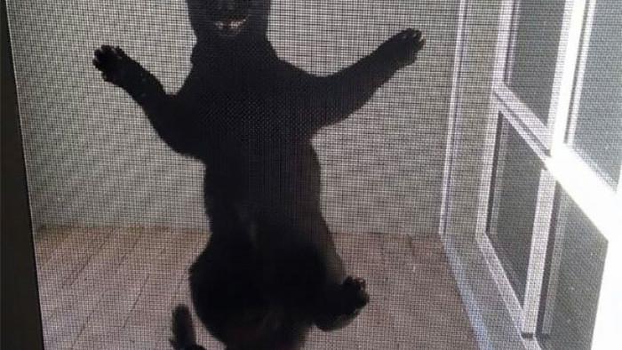 Chùm ảnh vui: Những hành động kỳ lạ đến không tưởng của loài mèo khiến các định luật vật lý trở nên vô nghĩa - Ảnh 8.