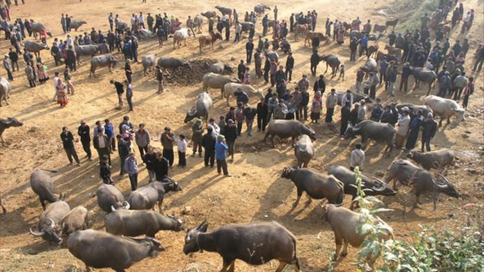 Đầu năm Tân Sửu đi chợ trâu lớn nhất vùng biên viễn Tây Bắc - 12