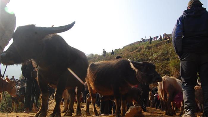 Đầu năm Tân Sửu đi chợ trâu lớn nhất vùng biên viễn Tây Bắc - 4