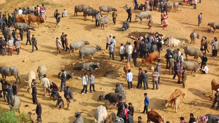 Đầu năm Tân Sửu đi chợ trâu lớn nhất vùng biên viễn Tây Bắc - 10