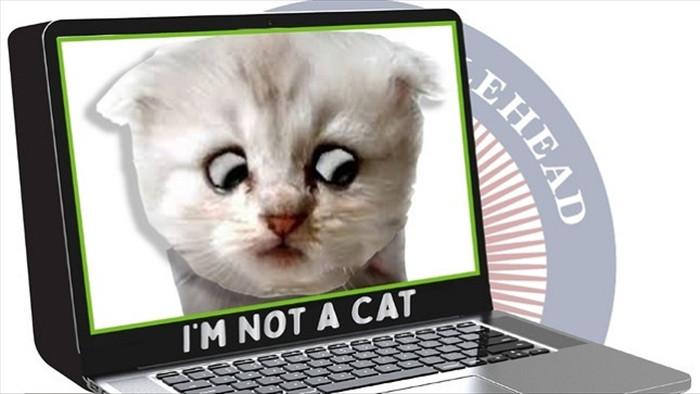 """""""Tôi không phải là mèo"""", câu nói hài hước thời Covid-19"""