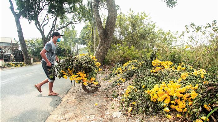"""CLIP: Ruộng hoa khô héo vì không bán được, dân trồng hoa """"gạt nước mắt cắt bỏ - Ảnh 2."""