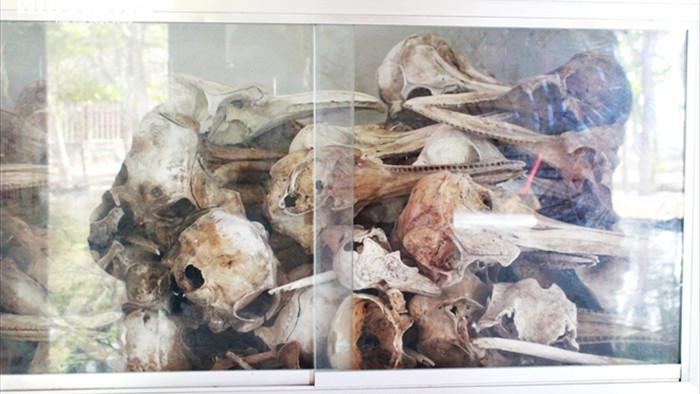 Ảnh: Nghĩa địa cá voi độc nhất Việt Nam - 10