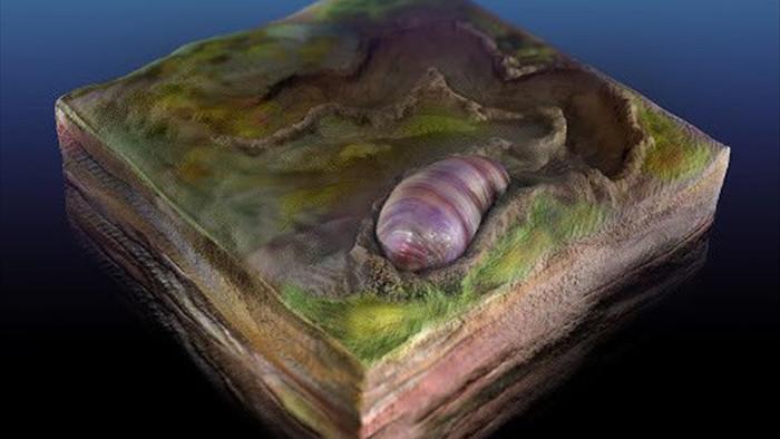 Phát hiện dấu vết sinh vật biển là tổ tiên lâu đời nhất của loài người? - 1