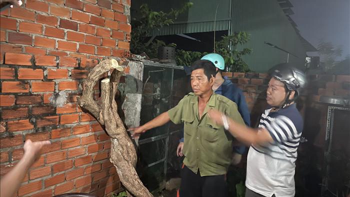 Khởi tố, bắt giam kẻ cưa trộm hoa giấy 20 năm tuổi ở Vũng Tàu  - Ảnh 1.