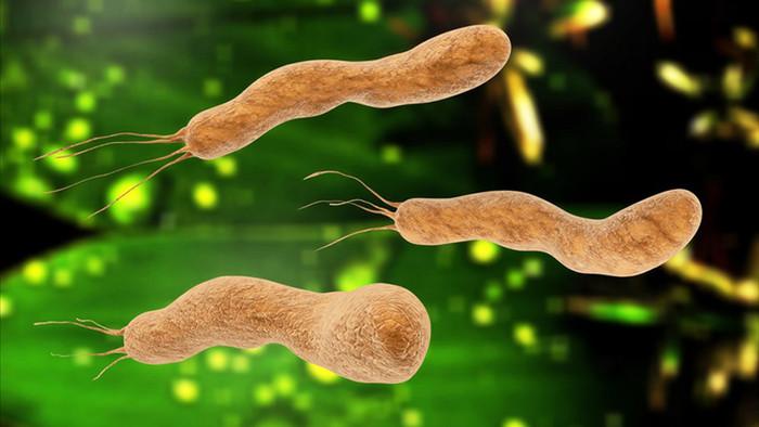 h1-vi-khuan-helicobacter-pylori-hp.jpg