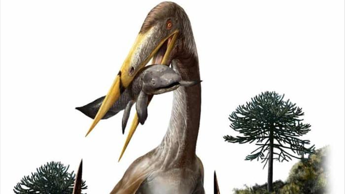 Giải mã bí mật của quái vật bay cổ dài hơn hươu cao cổ - 1