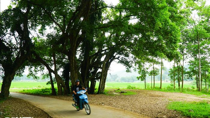 Tận mắt thấy cây ma làng tồn tại hơn 8 thế kỷ ở Hòa Bình - 3