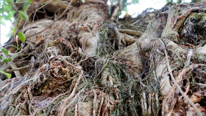 Tận mắt thấy cây ma làng tồn tại hơn 8 thế kỷ ở Hòa Bình - 8