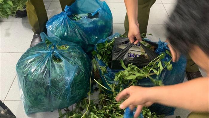 Phát hiện loạt giỏ lớn bên ngoài phủ rau xanh bên trong toàn hàng cấm - 1
