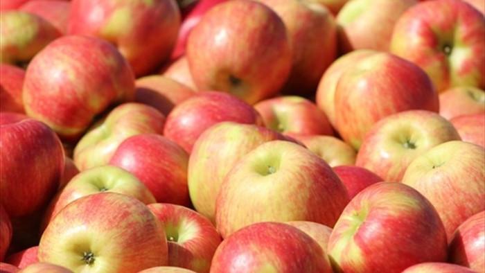 Algeria cấm nhập 13 loại trái cây: Việt Nam có bị ảnh hưởng? - 1