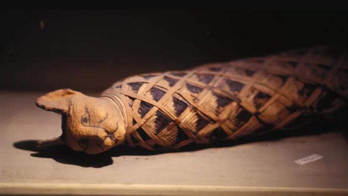 Tại sao người Ai Cập cổ đại lại bị ám ảnh bởi loài mèo? - Ảnh 5.