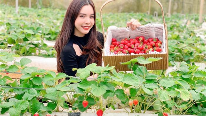 Bỏ việc, cắm sổ đỏ đi trồng dâu tây: Đón 3 vạn khách, thu 3 tỷ đồng mỗi năm - 1
