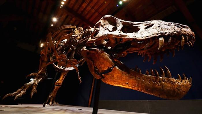 Lực cắn ngàn cân của khủng long bạo chúa đáng sợ cỡ nào? - 1