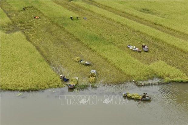 Ninh Binh: Dac sac mua gat o Tam Coc hinh anh 1
