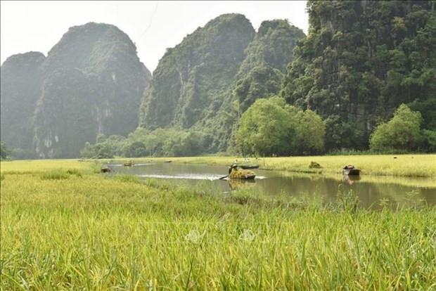 Ninh Binh: Dac sac mua gat o Tam Coc hinh anh 5