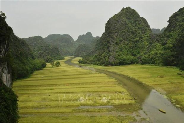 Ninh Binh: Dac sac mua gat o Tam Coc hinh anh 6