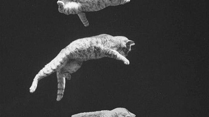 Tại sao mèo có thể ngã từ tầng 32 xuống đất mà vẫn sống sót? - Ảnh 2.