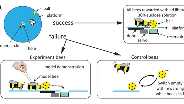 Không thể tin nổi: Video bắt quả tang 2 con ong làm việc teamwork để mở nắp một chai nước ngọt? - Ảnh 3.