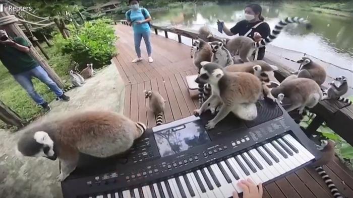 Sở thú ế ẩm vì dịch, động vật nghe nhạc sống... cho đỡ buồn - 2