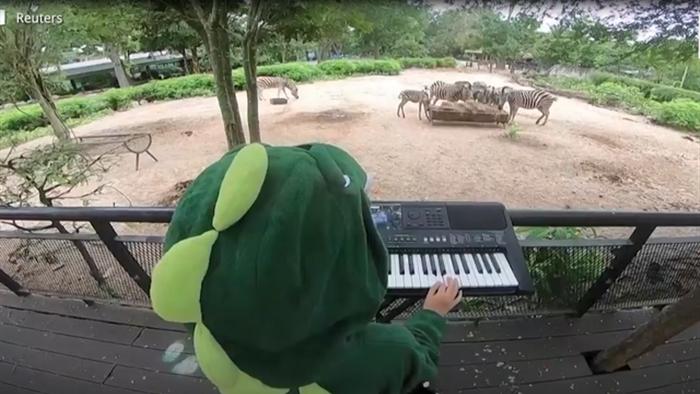 Sở thú ế ẩm vì dịch, động vật nghe nhạc sống... cho đỡ buồn - 1