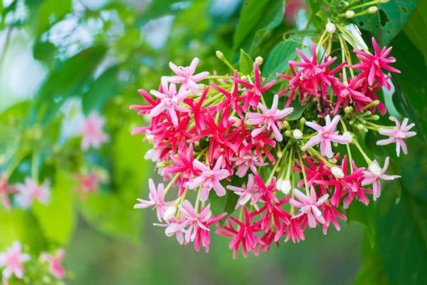 Những loại cây dễ trồng cho ban công chống nắng nóng đổ lửa ngày hè-5