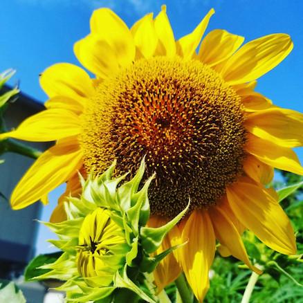 Những loại cây dễ trồng cho ban công chống nắng nóng đổ lửa ngày hè-6