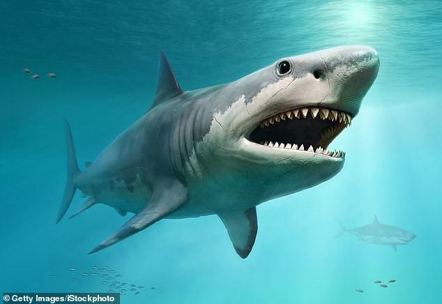 Quái vật tiền sử dài gần 20 mét: Nỗi khiếp sợ cho mọi giống loài dưới nước-1