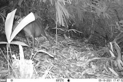 Phát hiện nhiều động vật hoang dã hiếm thấy ở Thừa Thiên Huế-3