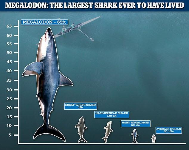 Quái vật tiền sử dài gần 20 mét: Nỗi khiếp sợ cho mọi giống loài dưới nước-3