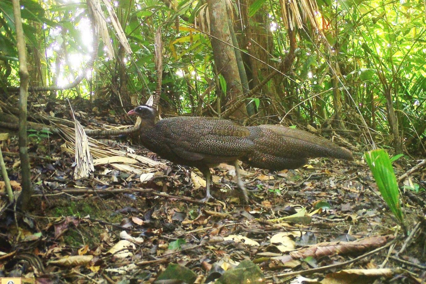 Phát hiện nhiều động vật hoang dã hiếm thấy ở Thừa Thiên Huế-4