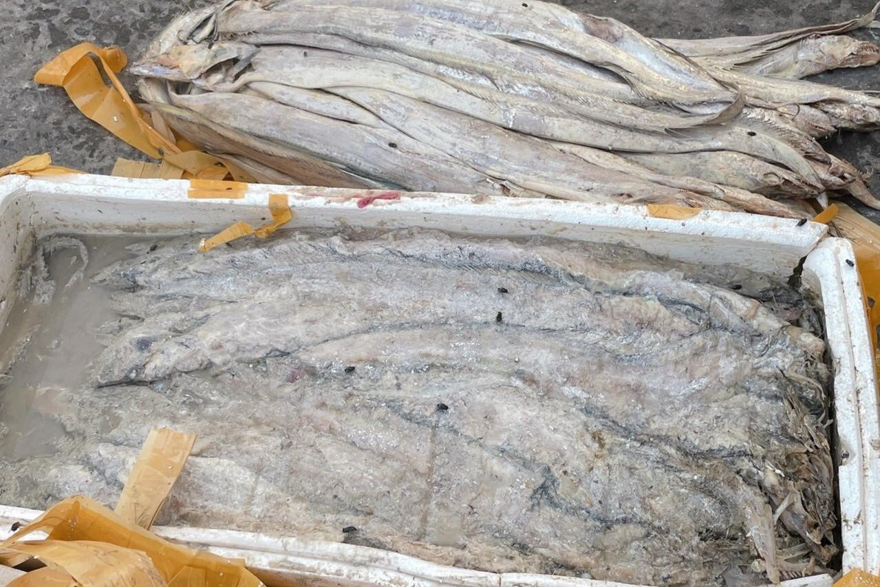 Doanh nghiệp mất tiền tỷ vì không thể xuất khẩu hải sản sang Trung Quốc-3