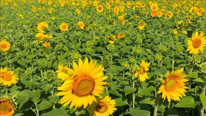 Thực vật cũng thức dậy khi trời sáng giống như con người-1