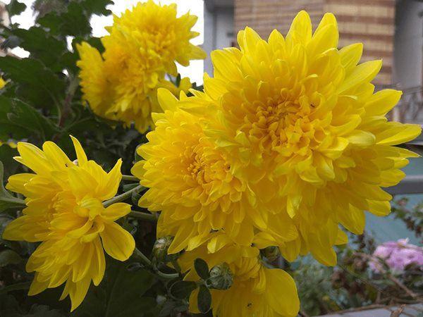6 loại hoa nên đặt lên bàn thờ Tết Đoan Ngọ, mang ý nghĩa may mắn bình an-3