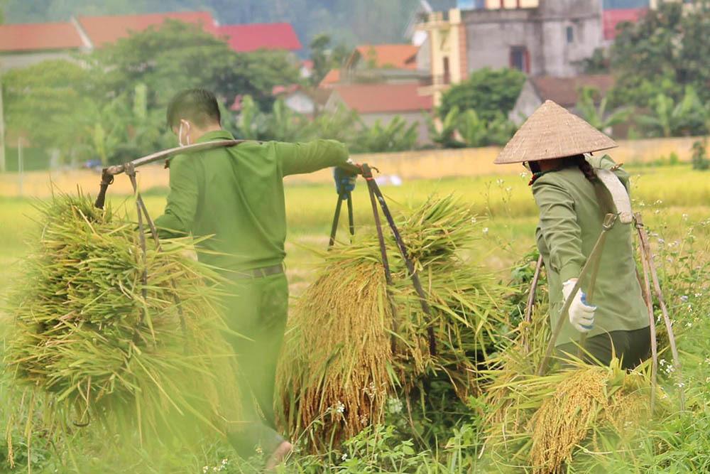 Hình ảnh ngày mùa trên cánh đồng nơi giãn cách ở Bắc Giang-4