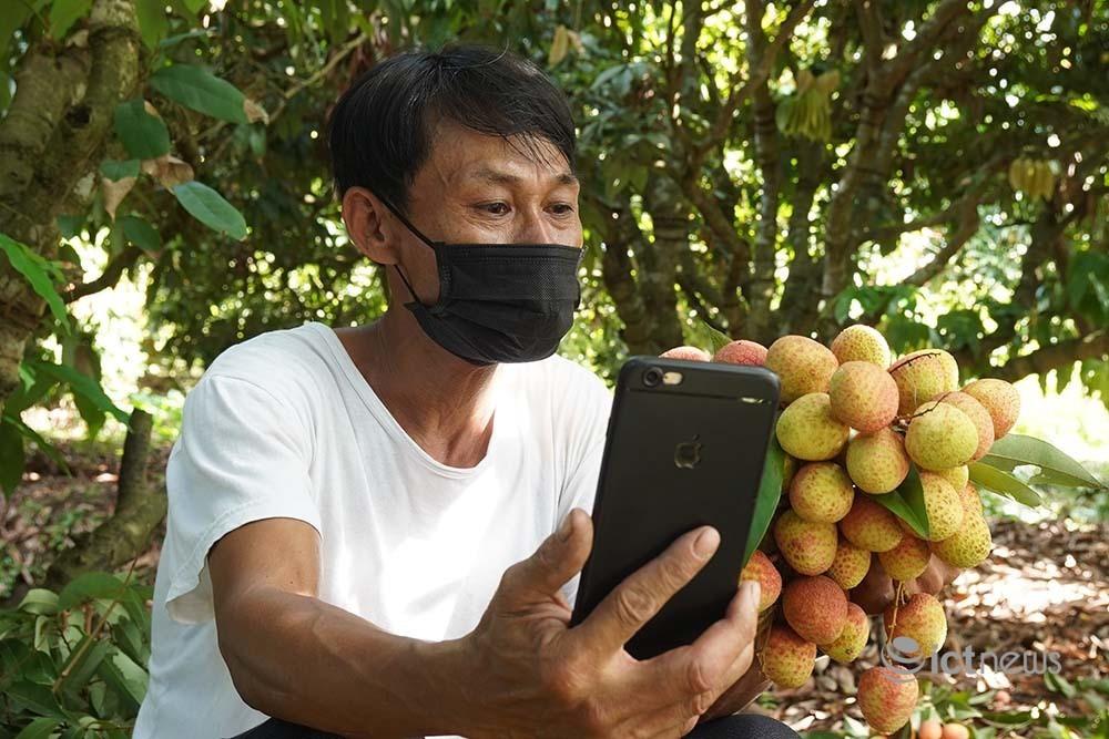 Vải Bắc Giang vào vụ, các sàn thương mại điện tử đồng loạt mở bán-2