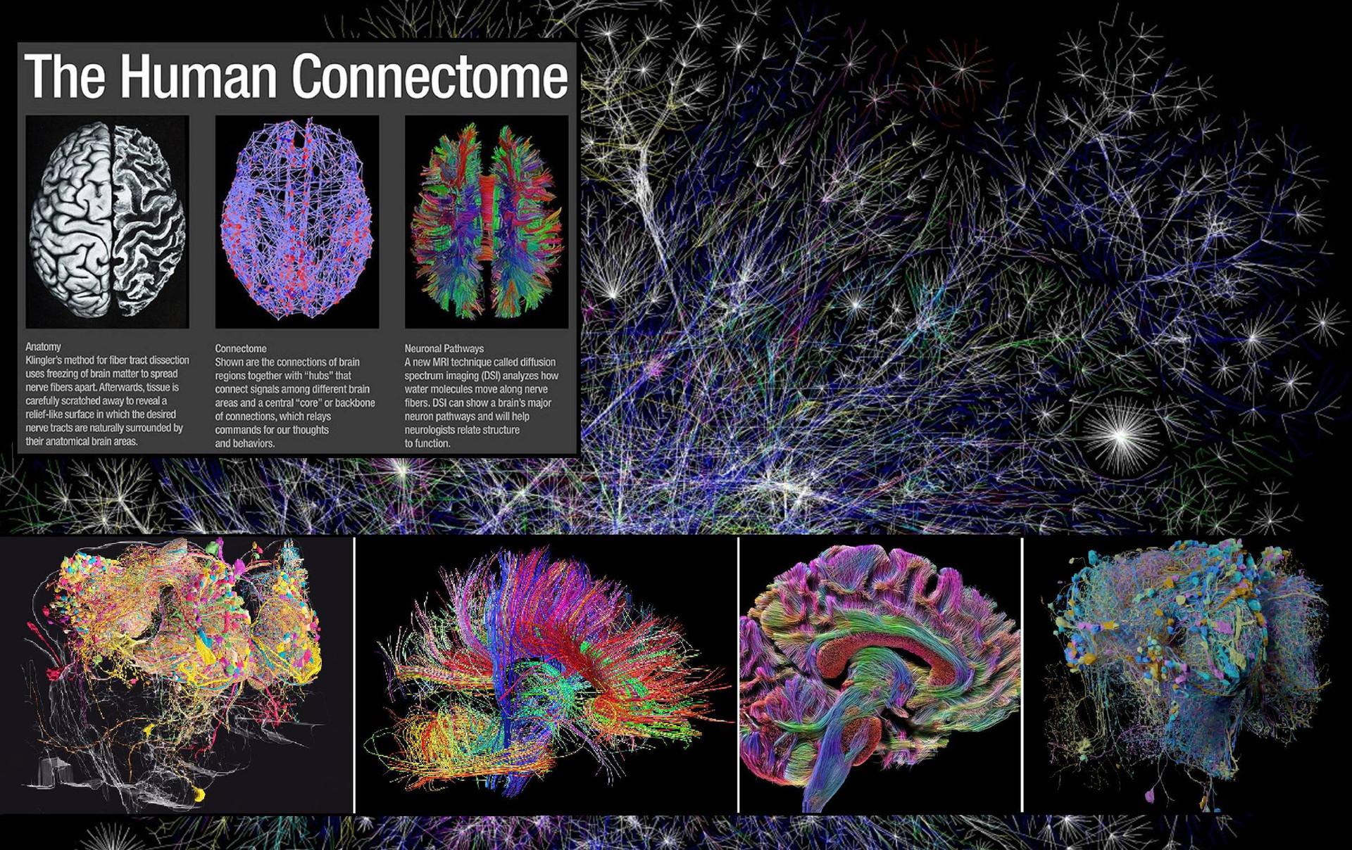 Chúng ta sẽ tải được não bộ lên máy tính để bất tử trong vòng 100 năm nữa?-2