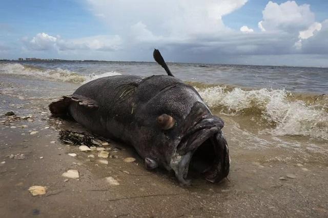 Câu được cá khổng lồ quý hiếm, ai cũng hết hồn vì trông như quái vật biển-1