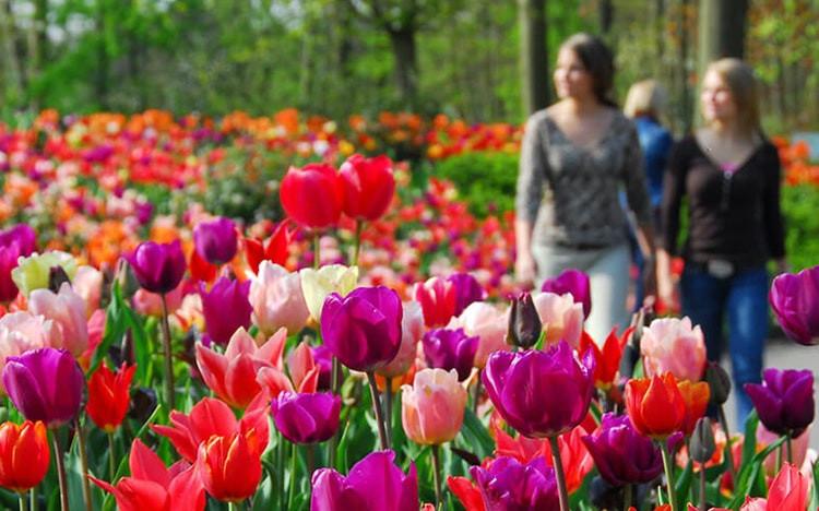 Say đắm với cảnh sắc vườn hoa đẹp nhất Hà Lan-4