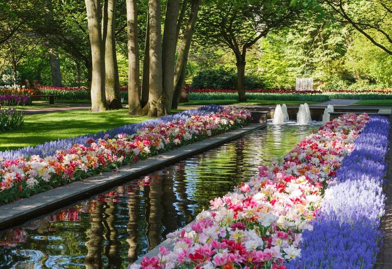 Say đắm với cảnh sắc vườn hoa đẹp nhất Hà Lan-3