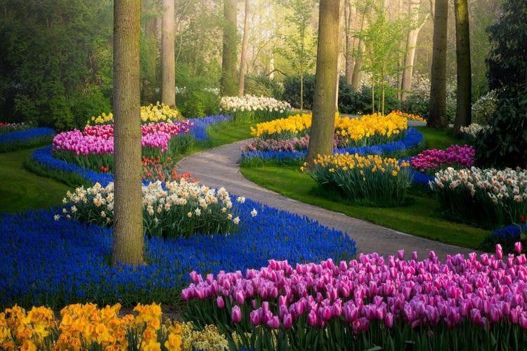 Say đắm với cảnh sắc vườn hoa đẹp nhất Hà Lan-1