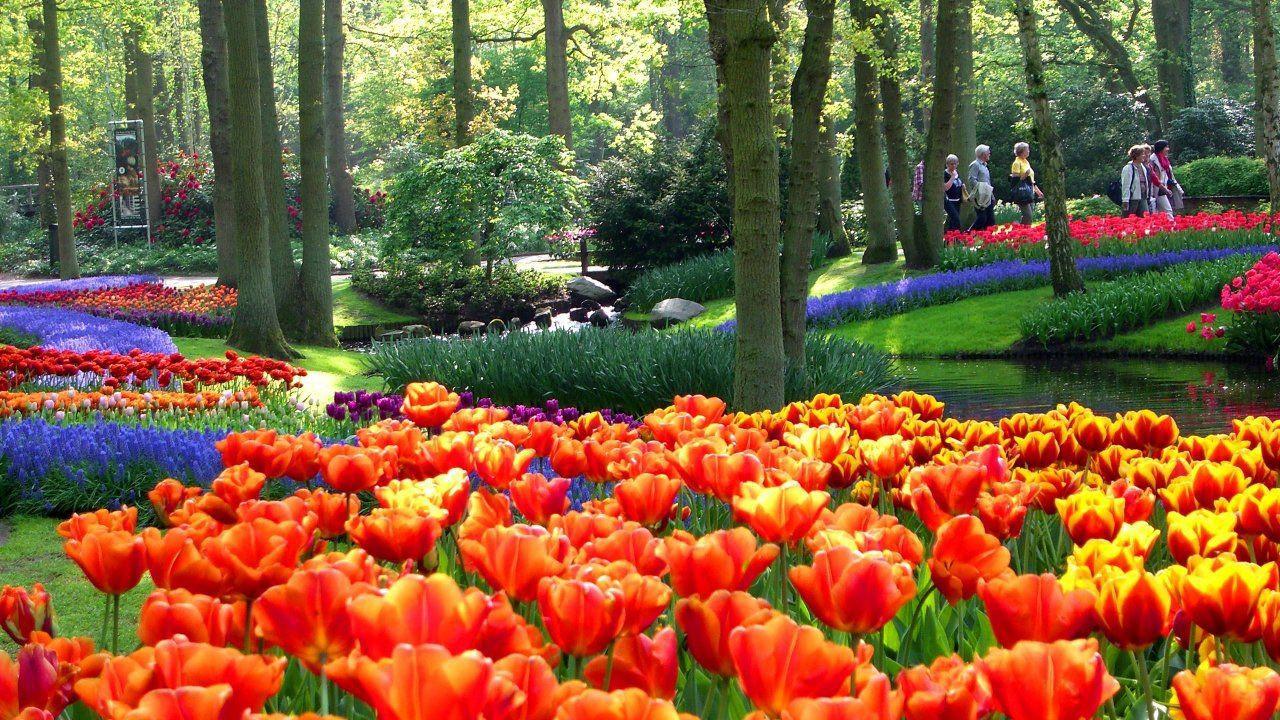 Say đắm với cảnh sắc vườn hoa đẹp nhất Hà Lan-2